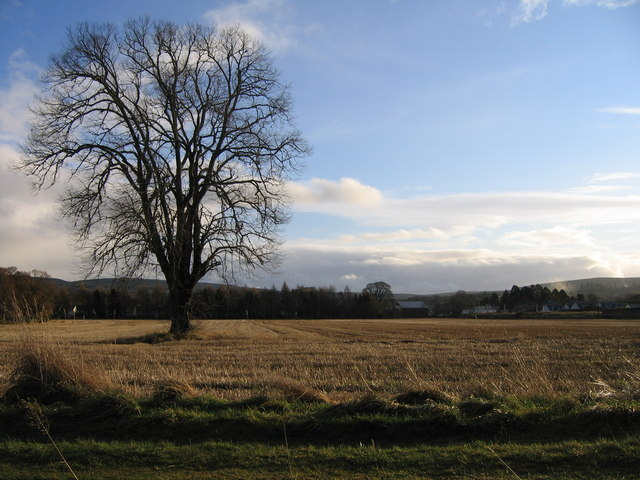 Kiltarlity tree