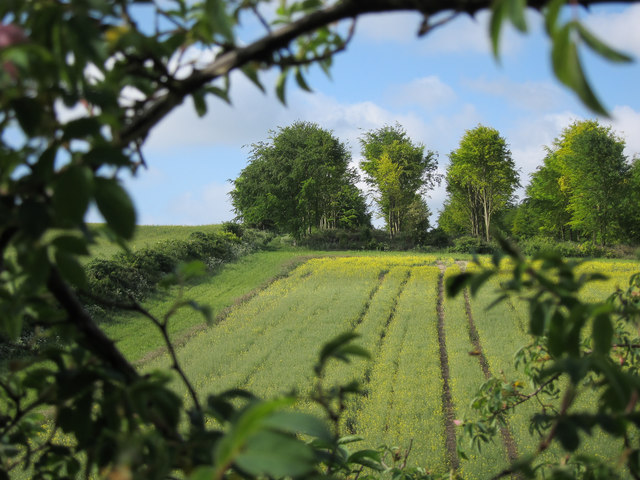 Plantation near Fleam Dyke