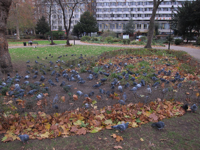 Russell Square pigeons