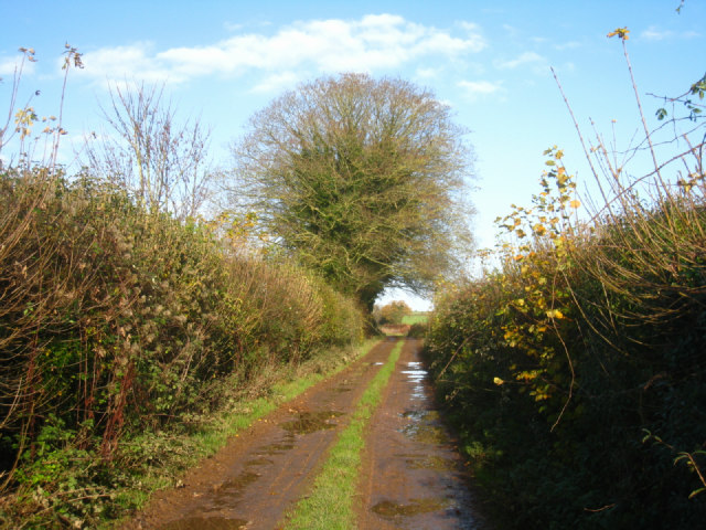 Bridleway to the Kingsclere Road