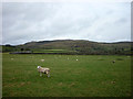 SD7768 : Sheep pasture east of Austwick by Karl and Ali