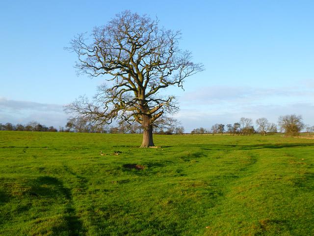 Pasture, Manfield