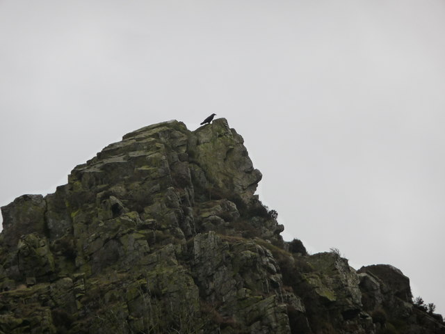 A  Raven on Nipstone Rock