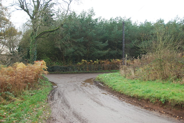Looking back to a road junction near the Ashley Road Plantation