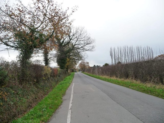 Ivy-covered trees along Booth Bed Lane