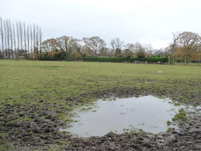 Soggy corner of a grazing field