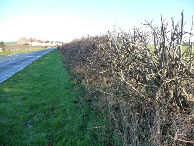 Winter hedge, Stoney Haggs Road