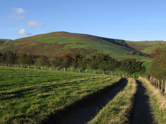 Fenced field with Mynydd Tarw