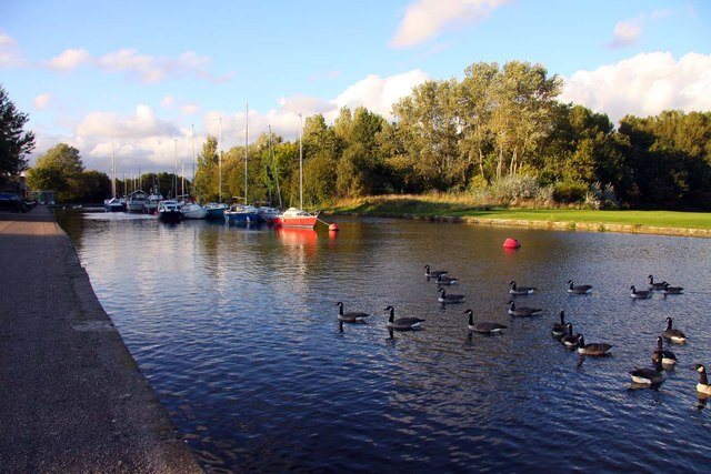 Boats and geese on the St Helens Canal