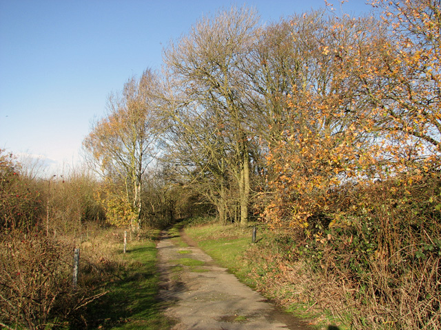 Track to Brandon Road, Feltwell