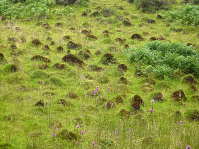 a field of ant hills near the hafod 169 phil champion