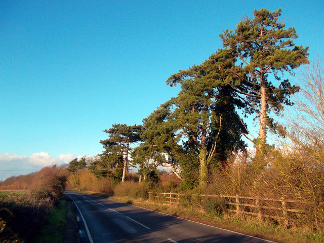 Sunshine on Shillingford Road