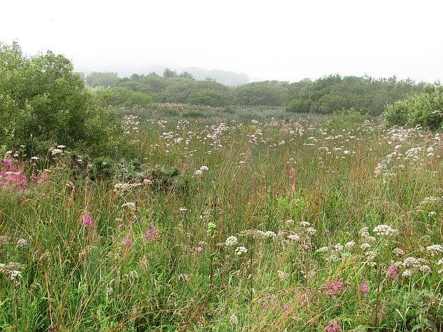 Wetland, Harcraig