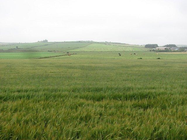 Barley, Quoscies