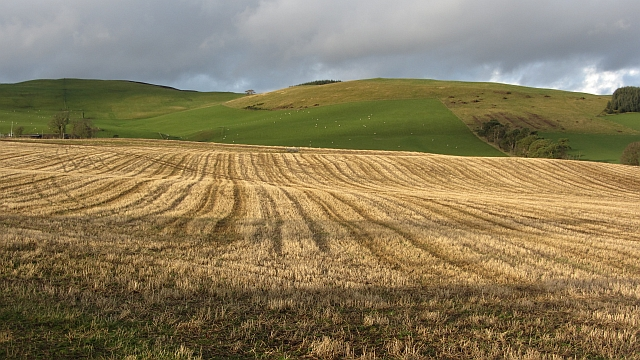 Stubble, Hillridge