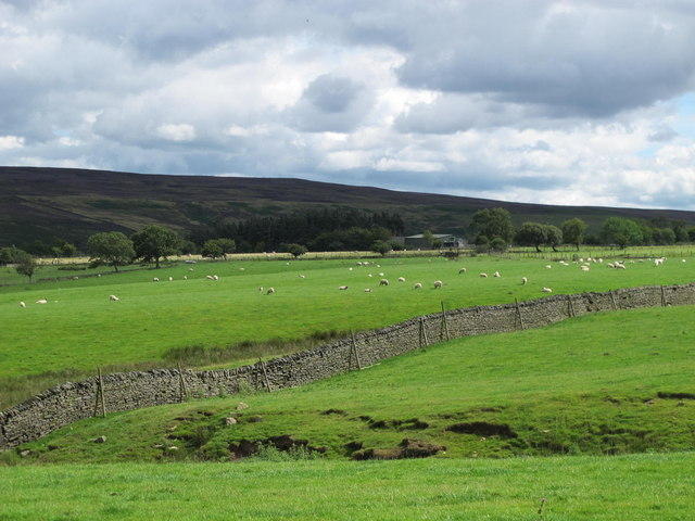 Pastures around Broadwell Sike (2)