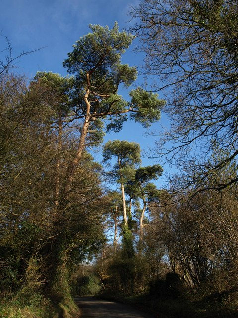 Pines, Church Lane, Chelsham