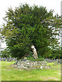 SN7465 : Yew tree in the churchyard at Strata Florida by Phil Champion