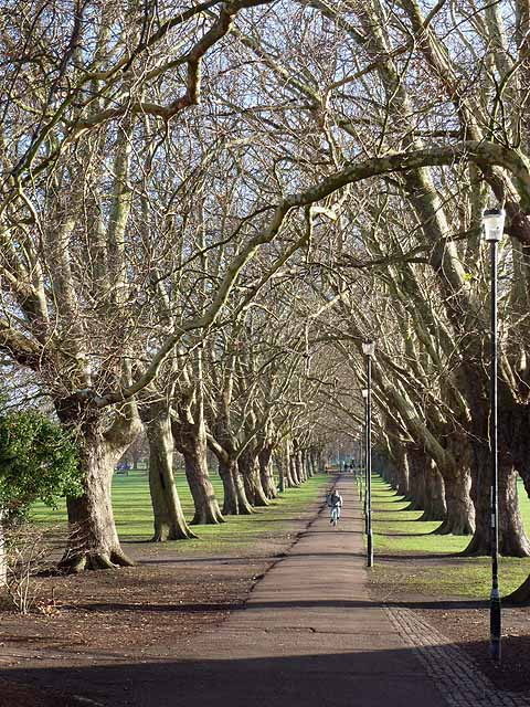 The Avenue, Jesus Green