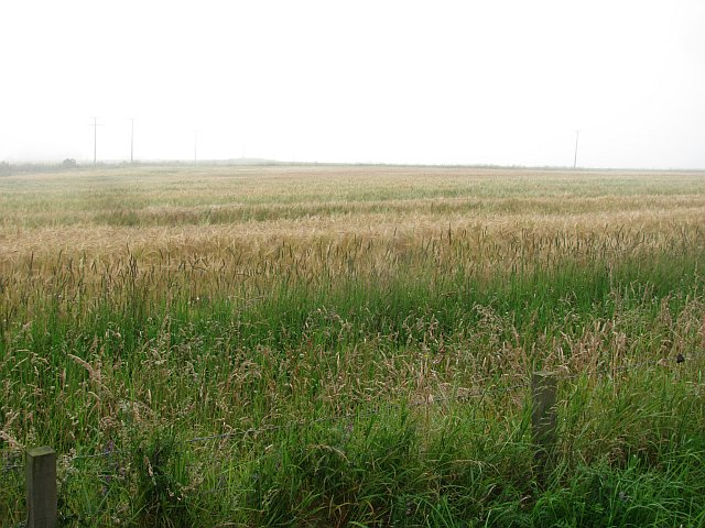 Barley, Newmachar