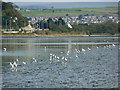 SX5155 : The Plym Estuary and beyond, from the tidal flats at the Saltram Estate by Ruth Sharville