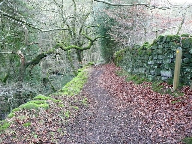 Track from Paper Mill to Paper Mill Wood