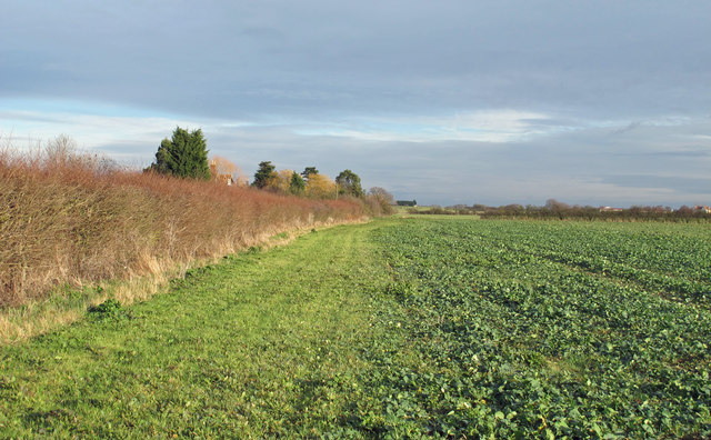 Hedgerow on field border