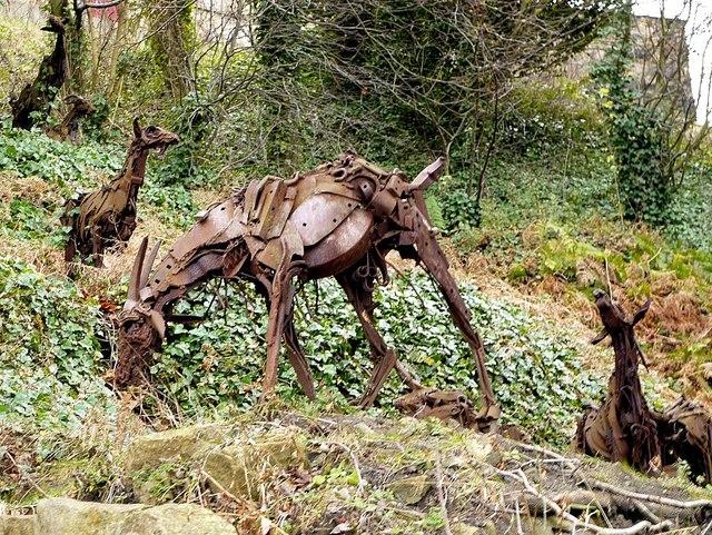Goats, Gateshead Riverside Park