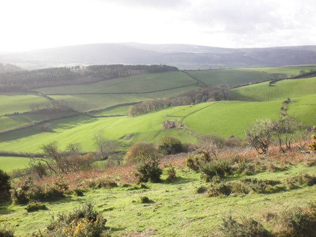 Little Headon Common