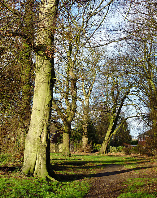 Trees in Muchall Park, Wolverhampton