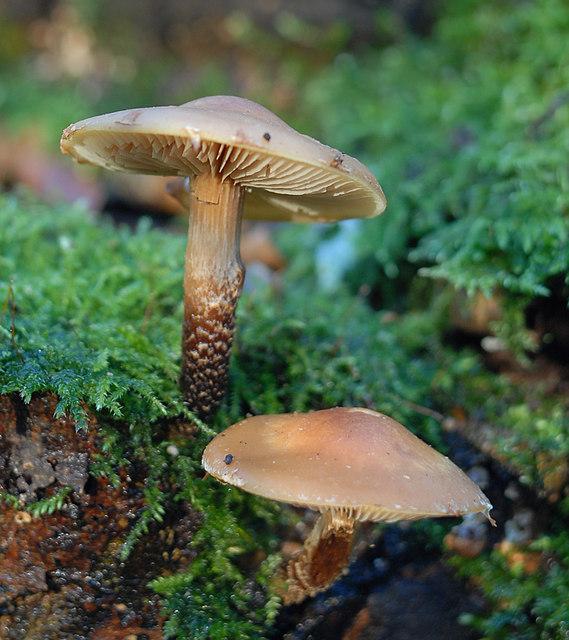 Fungi in Billinge Plantation