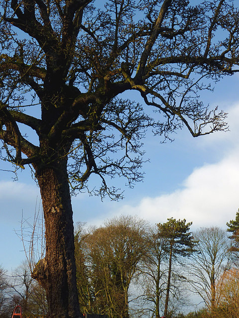 Muchall Park trees in Penn, Wolverhampton