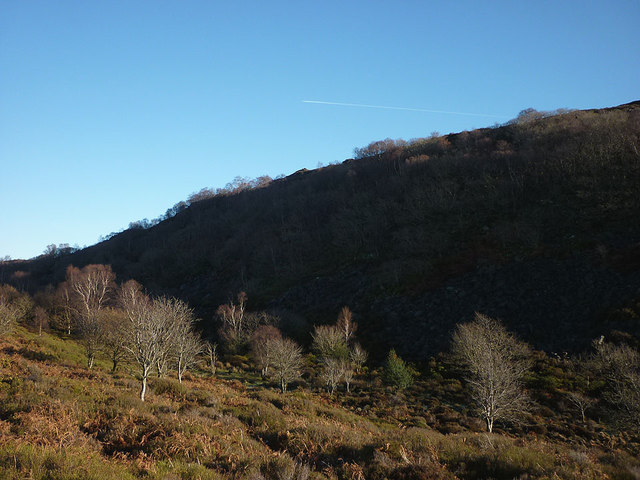 Trees below Birk Bank