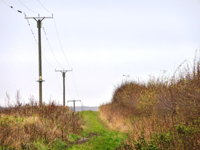 Telegraph poles along New Lane