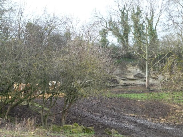 Face of former quarry, Newthorpe