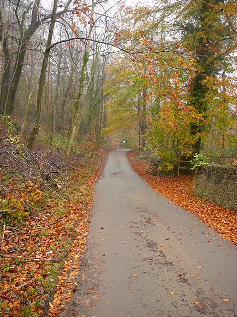 Autumn colours on lane below Kites Hill near Painswick