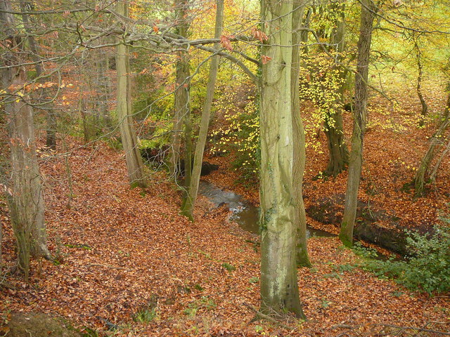 Autumn colours in wooded valley south of Damsells Mill