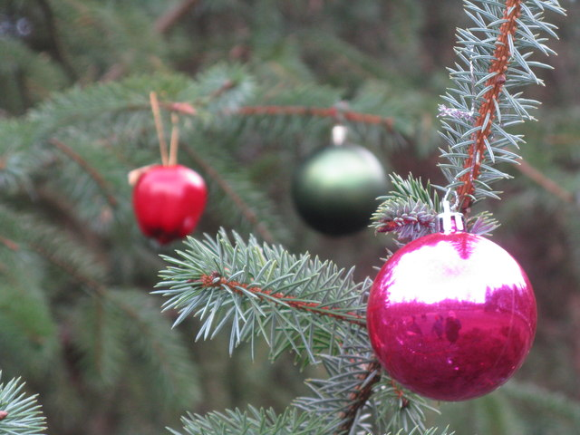Baubles on the tree