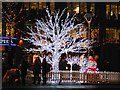 SJ8498 : Illuminated Tree, Piccadilly Gardens by David Dixon