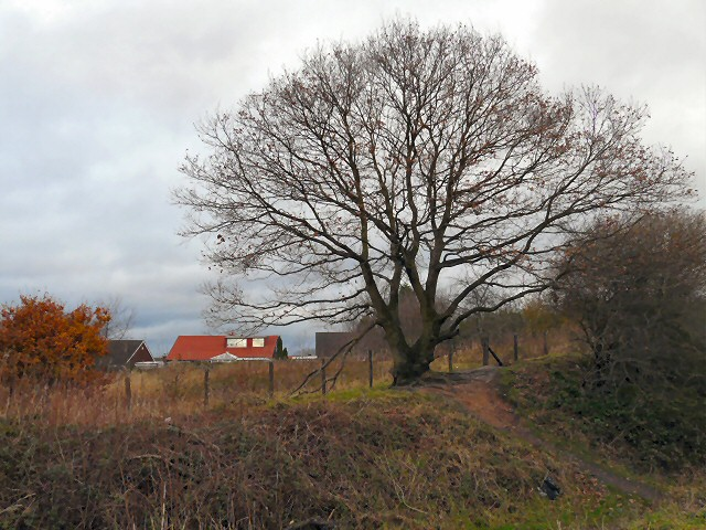 Tree at Foxholes