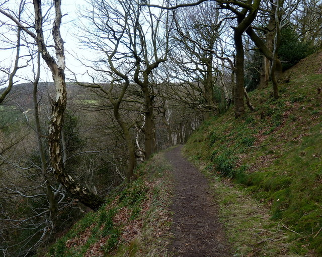 Footpath across steep wooded hillside