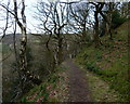 SK2692 : Footpath across steep wooded hillside by Andrew Hill