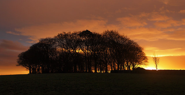 Sunset behind the Dickie Wood