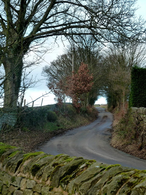 Looking up Smallfield Lane