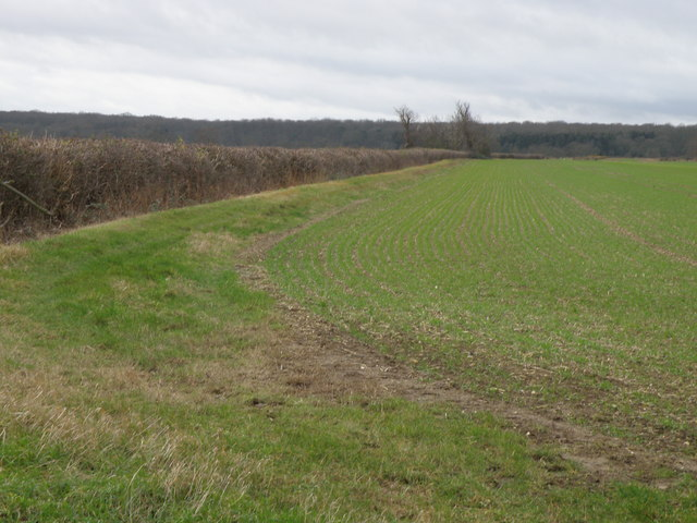 Bridleway looking towards Ashton Wold