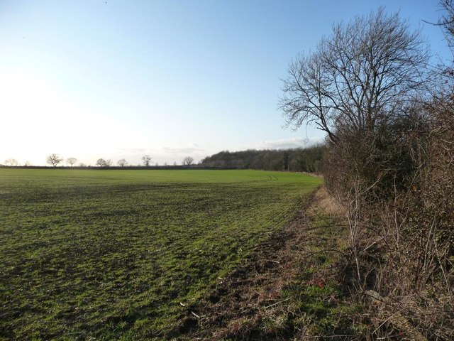 Northern edge of large field