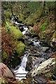 SH5549 : Stream in Beddgelert Forest : Week 52