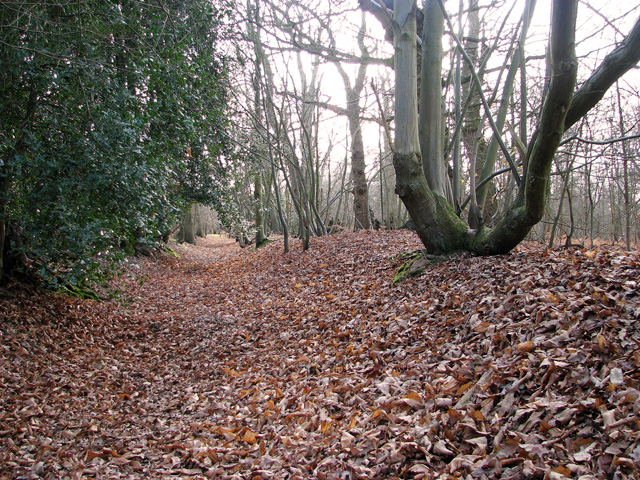 Dead Lane through The Commons, East Bergholt