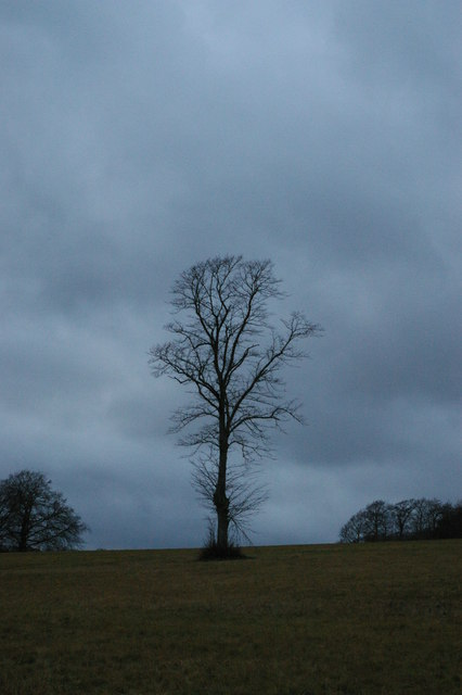Last light of 2011: lone tree, Farnborough