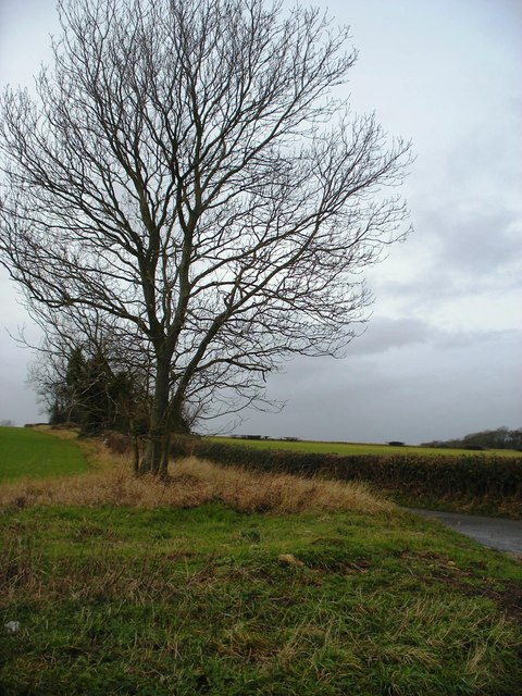Tree on the corner of Hickingwood Lane